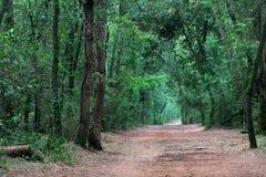 Путь пущи гуляя Стоковые Изображения