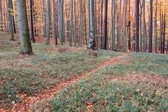 Путь пущи осени покрытый с листьями Стоковые Изображения RF