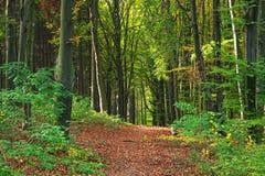 Путь пущи осени Стоковые Изображения