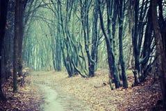 Путь пущи падения Стоковое Фото