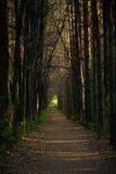 путь пущи Стоковое фото RF
