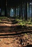 путь пущи Стоковые Фотографии RF