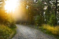путь пущи Стоковое Фото