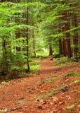 Путь пущи Стоковая Фотография RF