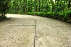 Путь пущи Стоковая Фотография