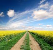 путь рапса поля Стоковая Фотография