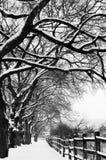 Путь реки Snowy Стоковое фото RF