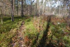 Путь рядом с молодым лесом Стоковые Фотографии RF