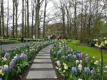 Путь сада цветков весны стоковое фото