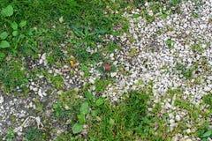 Путь сада взбрызнут при белый гравий и зеленая трава растя вдоль его стоковые изображения