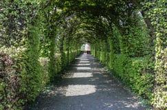 Путь свода официального сада фигурной стрижки кустов стоковое фото