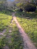 Путь сельской местности идя Стоковое фото RF