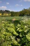 Путь сельской местности, сельская Англия Стоковые Изображения RF