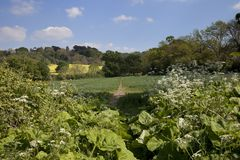 Путь сельской местности, сельская Англия Стоковое Фото