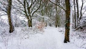 Путь снега груженый через красивую древесину в английской сельской местности стоковые фотографии rf