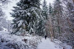 Путь снега груженый через красивую древесину в английской сельской местности стоковая фотография
