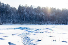 Путь снега к лесу стоковые фотографии rf