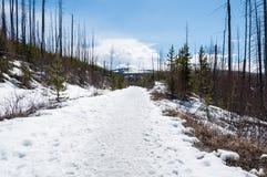 Путь снежка стоковое изображение rf