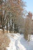 путь снежный Стоковое Изображение RF