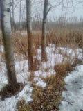 путь снежный Стоковые Фотографии RF