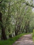 Путь среди дерева, прогулка стоковая фотография rf