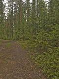 Путь среди деревьев Стоковые Фотографии RF