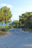 Путь среди сосен стоковые фото