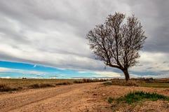 Путь с деревом стоковые изображения
