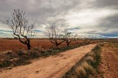 Путь с миндальными деревьями стоковое фото rf