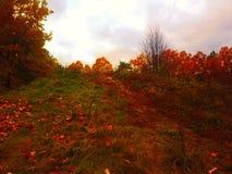 Путь с полным цветов Стоковые Фото
