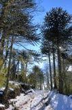Путь с снегом Стоковые Изображения