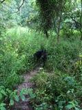 Путь с собакой Стоковые Изображения