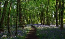 Путь с тенями отливки света Солнця через древесины Bluebell, древесины Northamptonshire Badby стоковое фото rf