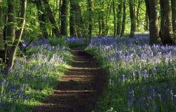 Путь с тенями отливки света Солнця через древесины Bluebell, древесины Northamptonshire Badby стоковые изображения
