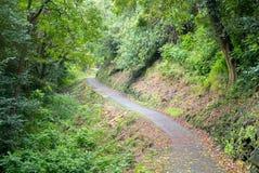 путь тропический Стоковое Изображение RF