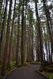 Путь тропического леса Стоковая Фотография