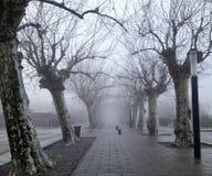 Путь туманного тоннеля дерева пугающий стоковая фотография rf
