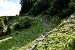 Путь луга Стоковая Фотография
