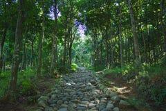 Путь утеса в лесе Стоковые Изображения