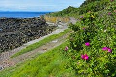 Путь файфа прибрежный около Crail стоковые фото