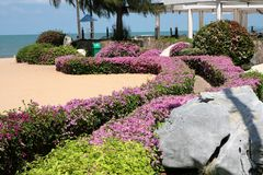путь цветка Стоковая Фотография RF