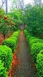 Путь цветка Стоковые Изображения RF