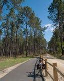 Путь цикла, Landes, Франция 2 Стоковое Изображение RF