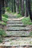 Путь через волшебный лес стоковое фото rf