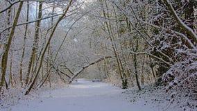 Путь через глушь обнаженных деревьев и кустарников зимы, предусматриванную в снеге стоковое фото