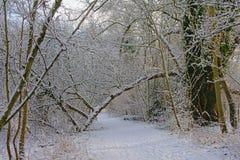 Путь через глушь обнаженных деревьев и кустарников зимы, предусматриванную в снеге стоковые фото