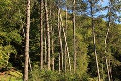 Путь через деревья Стоковое Изображение