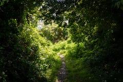 Путь через затеняемые деревья к солнечному свету стоковое фото rf