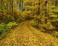 Путь через лес в падении стоковая фотография rf