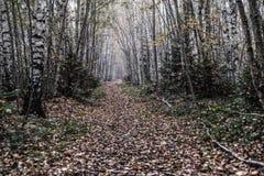 Путь через лес Стоковая Фотография RF